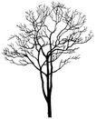 枯树0016,枯树,植物,