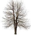 枯树0017,枯树,植物,