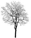 枯树0018,枯树,植物,