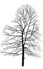 枯树0020,枯树,植物,