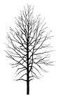 枯树0021,枯树,植物,