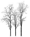 枯树0022,枯树,植物,