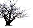 枯树0025,枯树,植物,