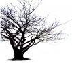 枯树0026,枯树,植物,