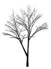枯树0028,枯树,植物,