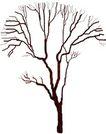 枯树0031,枯树,植物,
