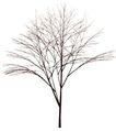 枯树0032,枯树,植物,