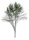 枯树0034,枯树,植物,