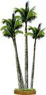 椰树0005,椰树,植物,