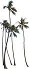 椰树0006,椰树,植物,