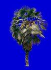 椰树0011,椰树,植物,