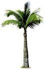 椰树0015,椰树,植物,