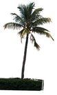 椰树0016,椰树,植物,