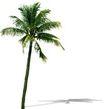 椰树0018,椰树,植物,