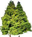 松柏0041,松柏,植物,