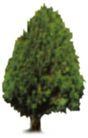 松柏0045,松柏,植物,
