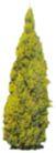 松柏0046,松柏,植物,