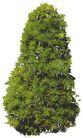 松柏0052,松柏,植物,