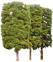 松柏0053,松柏,植物,