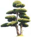 松柏0054,松柏,植物,