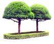 松柏0066,松柏,植物,