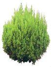 松柏0076,松柏,植物,