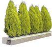 松柏0082,松柏,植物,