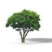 盆栽植物0186,盆栽植物,植物,