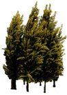 盆栽植物0188,盆栽植物,植物,