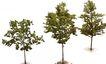 盆栽植物0190,盆栽植物,植物,
