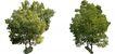 盆栽植物0191,盆栽植物,植物,