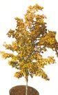 盆栽植物0192,盆栽植物,植物,