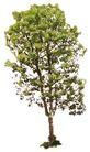 盆栽植物0195,盆栽植物,植物,