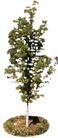 盆栽植物0198,盆栽植物,植物,