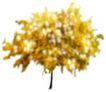 盆栽植物0201,盆栽植物,植物,