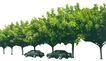 盆栽植物0204,盆栽植物,植物,