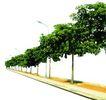 盆栽植物0205,盆栽植物,植物,