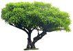 盆栽植物0209,盆栽植物,植物,