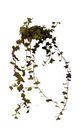盆栽植物0212,盆栽植物,植物,