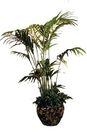 盆栽植物0216,盆栽植物,植物,