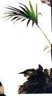 盆栽植物0224,盆栽植物,植物,