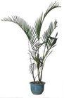 盆栽植物0228,盆栽植物,植物,