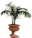 盆栽植物0229,盆栽植物,植物,