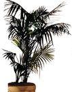 盆栽植物0234,盆栽植物,植物,