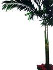 盆栽植物0236,盆栽植物,植物,