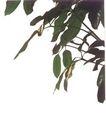 盆栽植物0237,盆栽植物,植物,