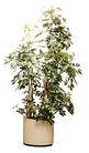 盆栽植物0238,盆栽植物,植物,
