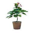 盆栽植物0239,盆栽植物,植物,
