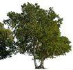 多棵及树群0016,多棵及树群,植物,
