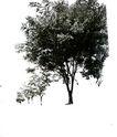 多棵及树群0017,多棵及树群,植物,